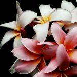 Vignette-page-fleurs-epanouies